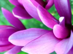 purple day - epilepsy awareness